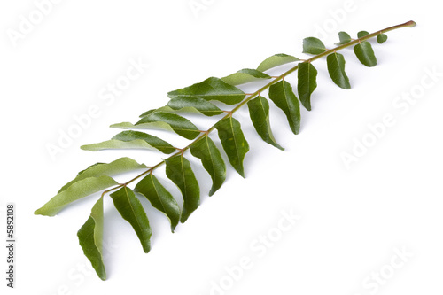 Isolated image of curry leaves.