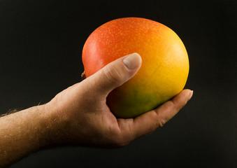 Mango fruit 1