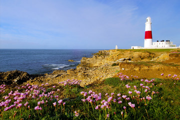 Portland Bill lighthouse with masses of sea pink thrift