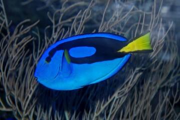 colorful fish in the aquariums