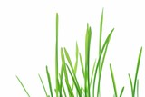 Close-up of fresh green straws against white background - 5914324