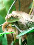 Fototapete Tier - Wildlife - Reptilien / Amphibien