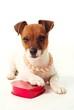 Puppy Love 03