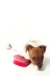 Puppy Love 02