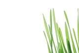 Close-up of fresh green straws against white background - 5931580