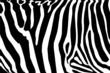vector - zebra texture Black and White