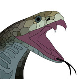 vector of aggressive cobra with open mouth poster