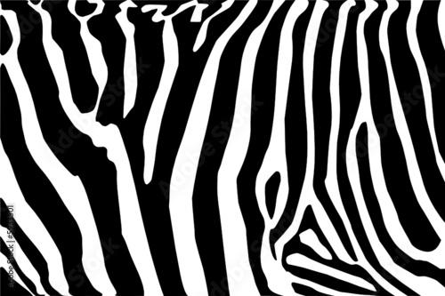 Obraz vector - zebra texture Black and White