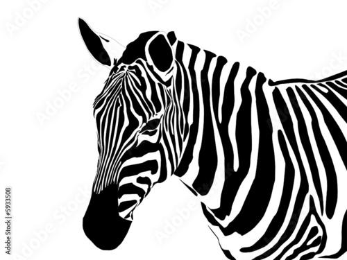 vector close up portrait of a zebra