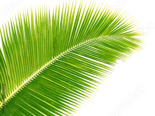 Papiers peints Palmier palme jaune
