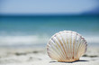 Leinwanddruck Bild - Beach concept. Sea shell with ocean on background.
