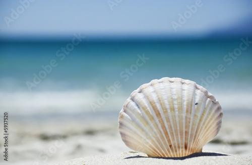 Leinwanddruck Bild Beach concept. Sea shell with ocean on background.