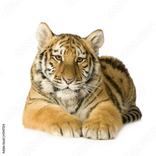 tygrysiatko-5-miesiecy