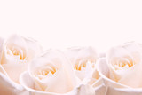 Bridal bouquet of pale pink roses. poster