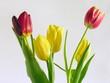 Fototapete Blume - Rot - Pflanze