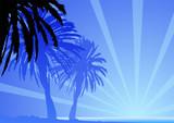 Palme e sole tropicali poster