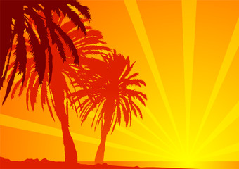 Palme e mare tropicali