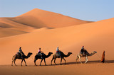 Camel caravan going the sand dunes in the Sahara Desert poster