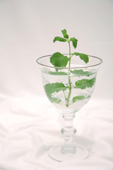 crystal wine glass with mint tree