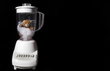 A tender and delicious gourmet Teddy Bear in a blender.
