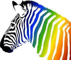 Zebra a colori