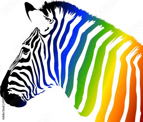 Zebra Kolor