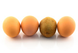 Kiwi, pretending to be an egg. White background. poster