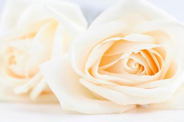 Two delicate high key beige roses macro