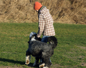 Dog, bearded collie, and girl playing for fun