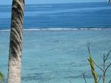 pirogue sur lagon turquoise et pied de cocotier poster