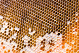 honeycomb macro with cells poster