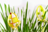 Easter egg in green grass and ladybird on white background poster