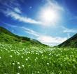 roleta: Mountain meadow