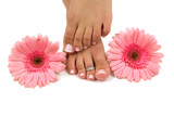 Pedicured feet and pink daisies poster