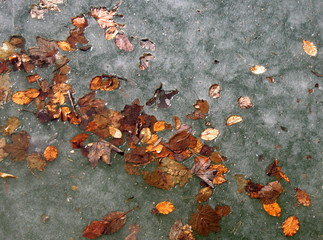 ice and leafs