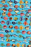 Fish magnet souvenirs from Phi Phi Island, Thailand. poster