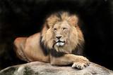 Fototapeta zwierzę - las - Inne