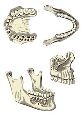 Poster dental