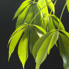 close up of dangling plant leaves