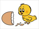 Osterküken schaut auf die braune Eierschale, isoliert poster