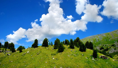 Panorama of hills with fir-trees, background
