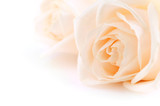 Floral background of two delicate high key beige roses  - 6046570