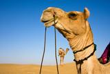 Head of a camel on safari - Thar desert, Rajasthan, India poster