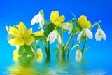 Fototapeta zima - kwiat - Kwiat