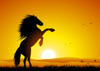 Wild horse at sunset rearing up