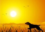 Hunter dog at sunset poster