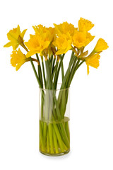 Yellow daffodils in a vase. Taken on a clean white background.