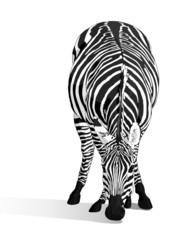 zebra_di_fronte