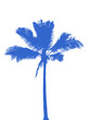 cocotier bleu