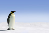 Penguin in Antarctica on a sunny day